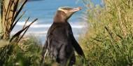 Wildlife Cruises & Tours - Monarch image 3