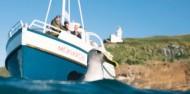 Wildlife Cruises & Tours - Monarch image 2