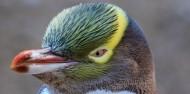 Wildlife Cruises & Tours - Monarch image 1