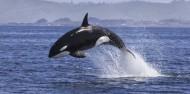 Dolphin & Wildlife Cruise image 2