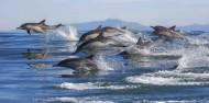 Dolphin & Wildlife Cruise image 1