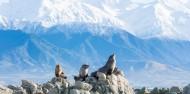 Kaikoura Day Tour & Whale Watching image 4
