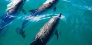 Kaikoura Day Tour & Whale Watching image 3
