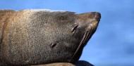 Kaikoura Day Tour & Whale Watching image 8