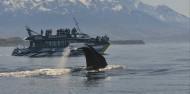 Kaikoura Day Tour & Whale Watching image 9