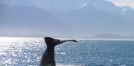 Kaikoura Day Tour & Whale Watching image 5