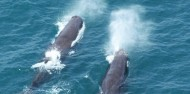 Wings Over Whales- Whale watching Flights image 1