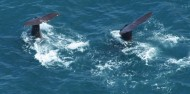 Wings Over Whales- Whale watching Flights image 5