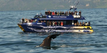 Kaikoura Day Tour & Whale Watching - Everything New Zealand