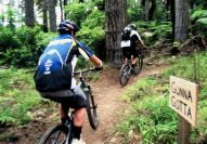 Mountain Biking - Redwood Forest - Everything New Zealand